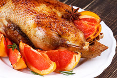 Duck with grapefruits Stock Image