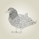 Duck. Hand drawing grunge sketch of a little duck Royalty Free Stock Photography