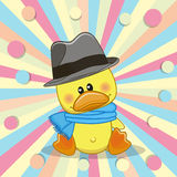 Duck with hat Stock Image