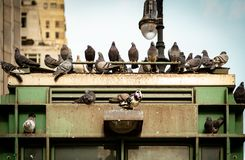 New York City Scape from Pidgeons on a building royalty free stock photography