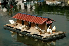 Duck house. In marina Galaxidi Greece stock photography