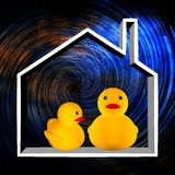 Duck in the house Stock Image