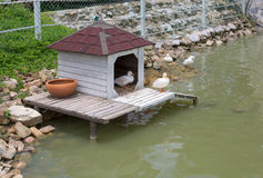 Duck house Royalty Free Stock Photography