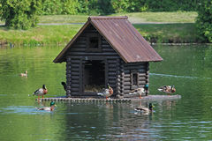 Duck house floating on the lake in the park. A wooden duck house with ducks and drakes on board is floating on the lake in the city park stock photos
