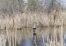 Duck House in Marsh Royalty Free Stock Images