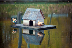 Duck house view. Duck house on the pond with two ducks Stock Image