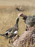 Duck Hunter. With a Widgeon Duck Stock Images