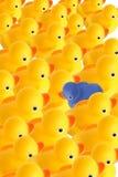 duck, inne zdjęcia royalty free