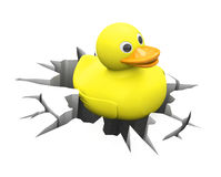 Duck inside a crack Royalty Free Stock Photo