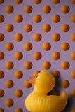 Duck l'orange Стоковое фото RF