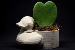 Duck la mini maceta con la flor del corazón admitida el estudio Fotografía de archivo libre de regalías