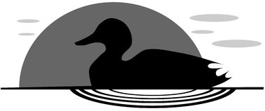 Duck on lake in grey tones Royalty Free Stock Photography
