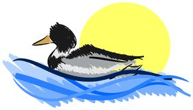 Duck on lake isolated Stock Images