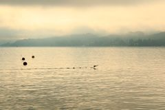 Duck lands on lake wörthersee in the sunrise royalty free stock images