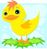 Duck on Leaves Royalty Free Stock Photo