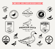 Duck Logos, Labels, Charts and Design Elements Royalty Free Stock Photography