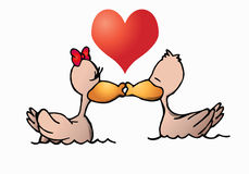 Duck love Stock Photo