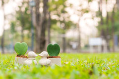 Duck mini flowerpot with heart flower on the garden Stock Image