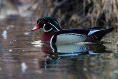 Duck Mirror Thatch de madera Fotografía de archivo