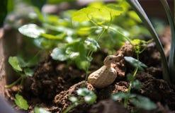 Duck Modelling Peanut i fält royaltyfria bilder
