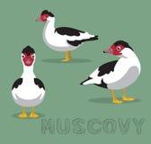 Duck Muscovy Cartoon Vector Illustration vektor illustrationer