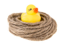 Duck nest Stock Image