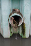 Duck Nest On Sewer Pipe Royalty Free Stock Photography