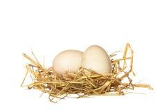 Duck o ovo na palha isolada no fundo branco Fotografia de Stock Royalty Free