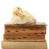 Duck on old books Royalty Free Stock Photos