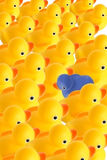 Duck with other idea. Many Ducks, … one with other idea Royalty Free Stock Photos