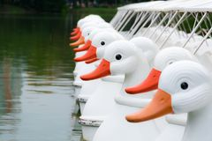 Duck Pedal Boats. Stock Photo
