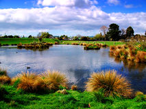 Duck pond. Across the duck pond at Masterton,New Zealand Royalty Free Stock Images