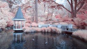 Duck Pond chez Wellington Botanical fait du jardinage le Nouvelle-Zélande image stock