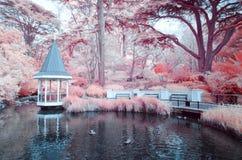 Duck Pond chez Wellington Botanical fait du jardinage le Nouvelle-Zélande photos stock