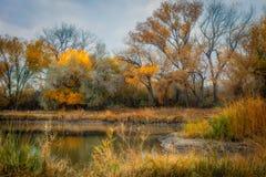 Duck Pond in de Herfst royalty-vrije stock foto