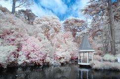 Duck Pond em Wellington Botanical jardina Nova Zelândia imagem de stock royalty free