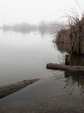 Duck pond on a foggy day Stock Photos