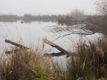 Duck pond on a foggy day Royalty Free Stock Image