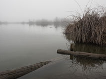 Duck pond on a foggy day Royalty Free Stock Photography