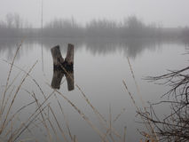 Duck pond on a foggy day Royalty Free Stock Photo