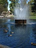 Duck pond Royalty Free Stock Images