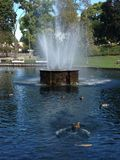 Duck pond Stock Images