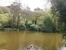 Duck pond royalty free stock photos