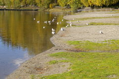 Duck Pond in Oslo Stock Image