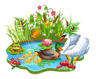 Free Duck Pond With Frogs, Swan, Ducklings And Fish Royalty Free Stock Photography - 114918217