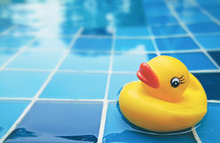 Duck pool Stock Photography