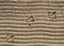 Duck Prints on the Sand. Of a beach, with some curved patterns on the surface of the sand Stock Image
