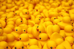 Duck Project de goma en Hong Kong Foto de archivo libre de regalías