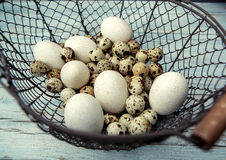 Duck and Quail Eggs Stock Image