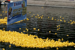 Duck race start Royalty Free Stock Photography